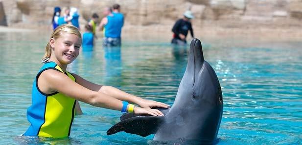 Dolphin Bay, Atlantis Hotel