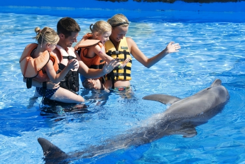 Vadar con los delfines en El parque de Adalan Sea Park