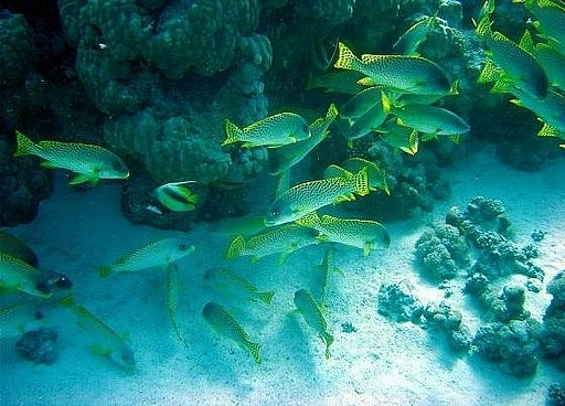 Snorkeling at Mahmya Island from Hurghada