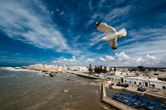 La naturalez en Essaouira.