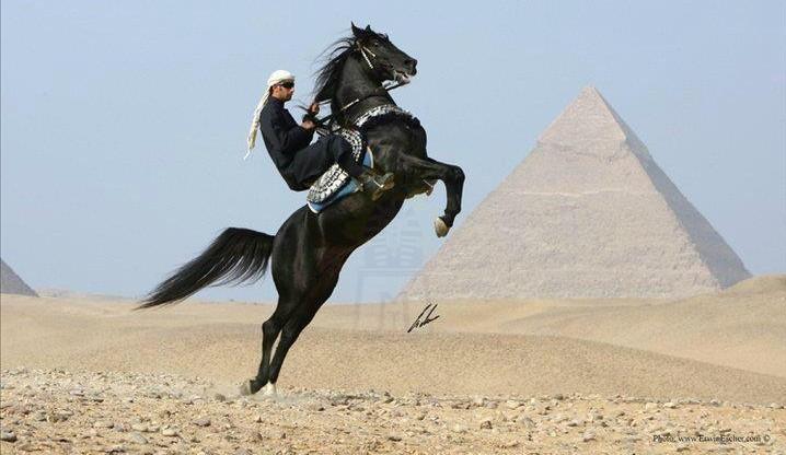 Horse Riding, Giza Pyramids