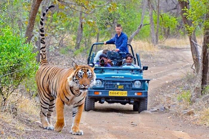 Parque Nacional de Ranthambore, India