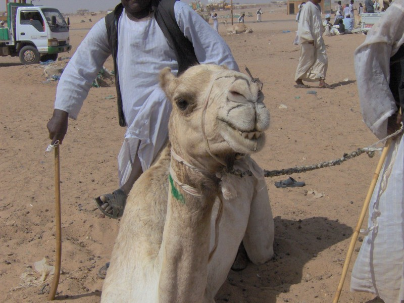 Mercato dei Cammelli