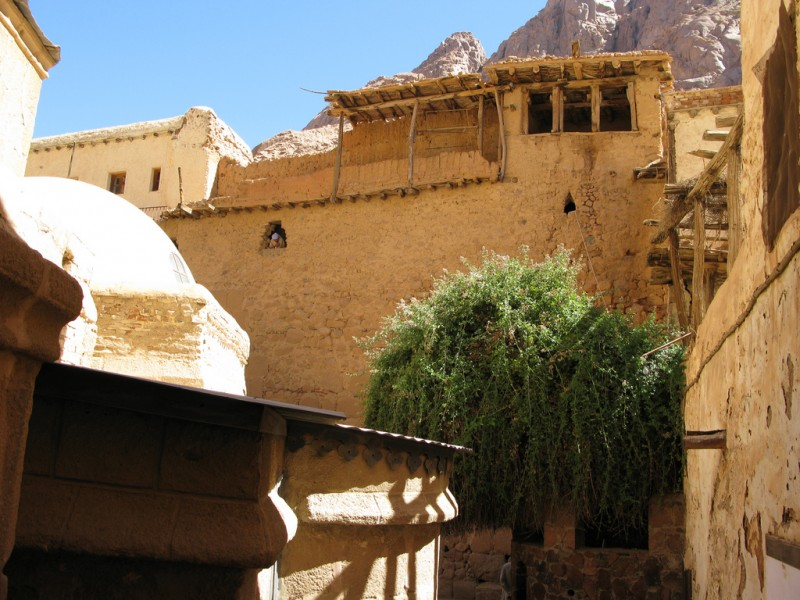 Burning Bush at St. Catherine Monastery, Sinai