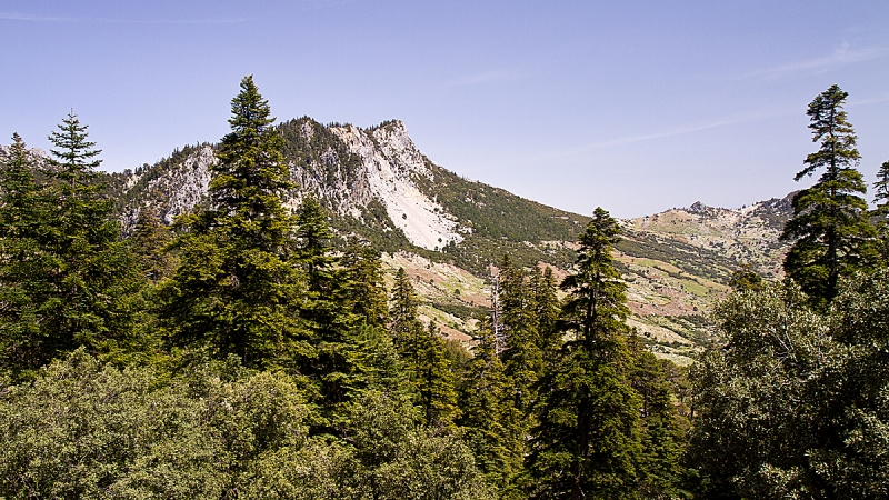 El bosque de cedros.