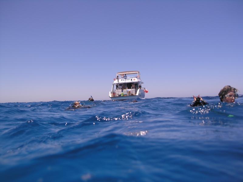 Snorkeling from Safaga