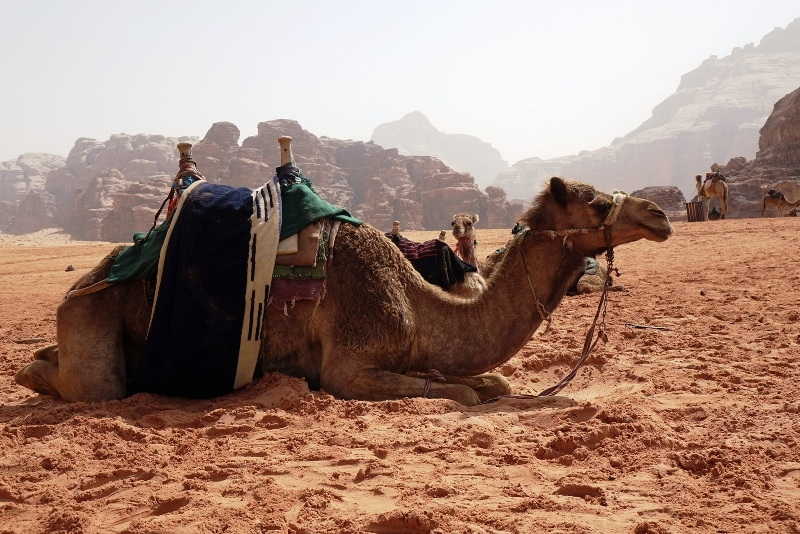 Wadi Rum Trips from Aqaba