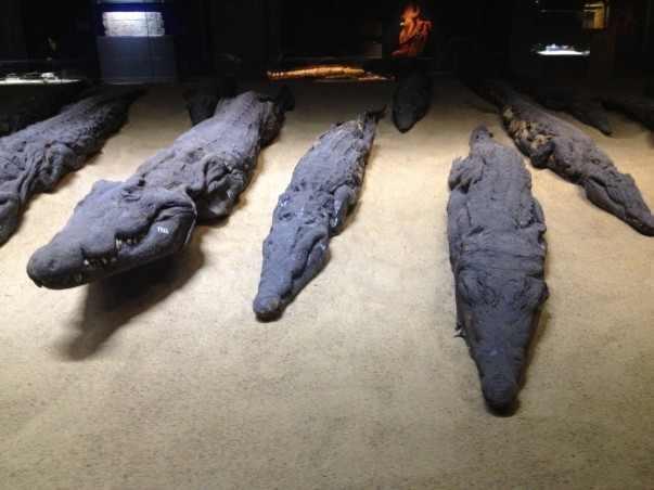 Mummies at Luxor Museum