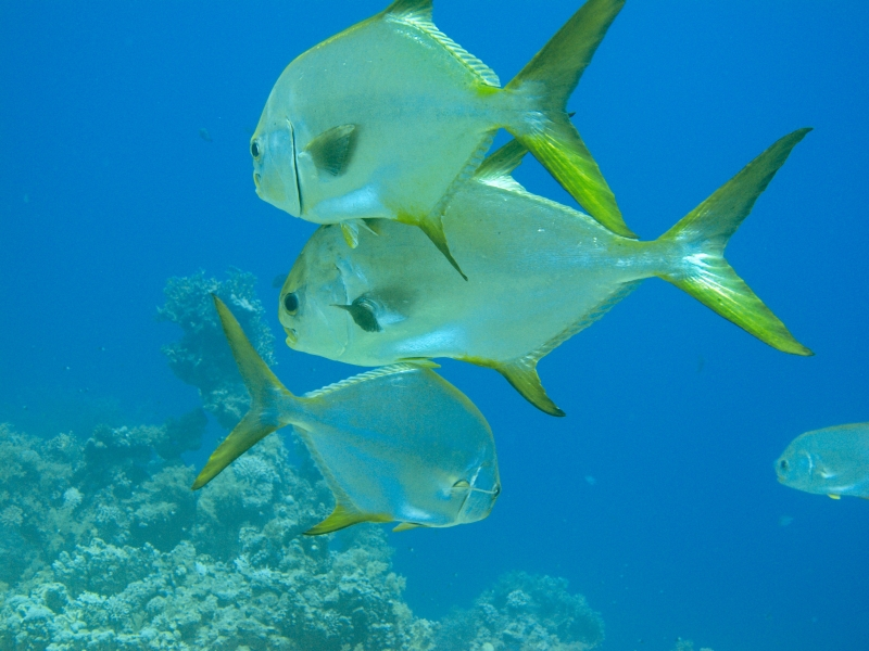 The unique fishes in Red Sea