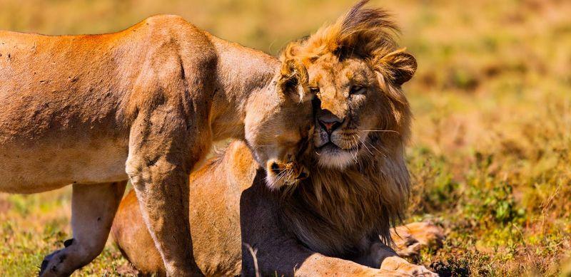 Ngorongoro Conservation Area Guide