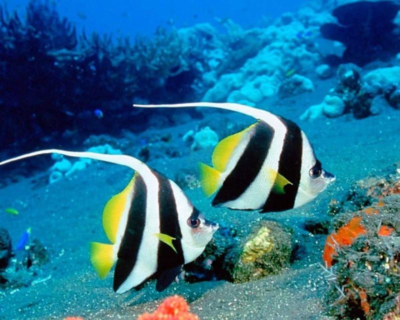 Beautiful Fishes Underwater, Mahmya