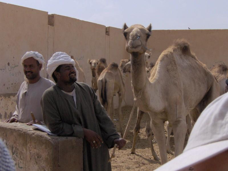 Mercato dei Cammelli al Cairo