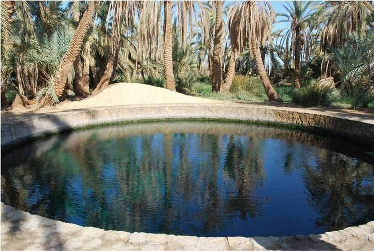 L'oasis de Siwa