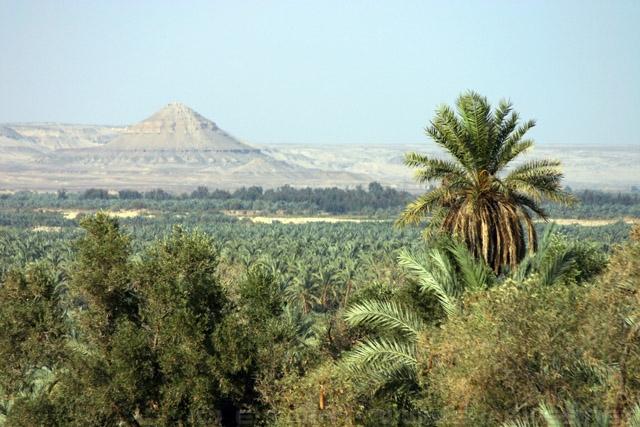 Informazioni sulle Escursioni nel Deserto