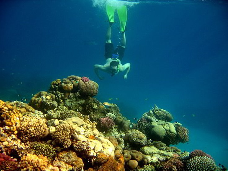 Snorkeling Trip & Excursion from Safaga Port