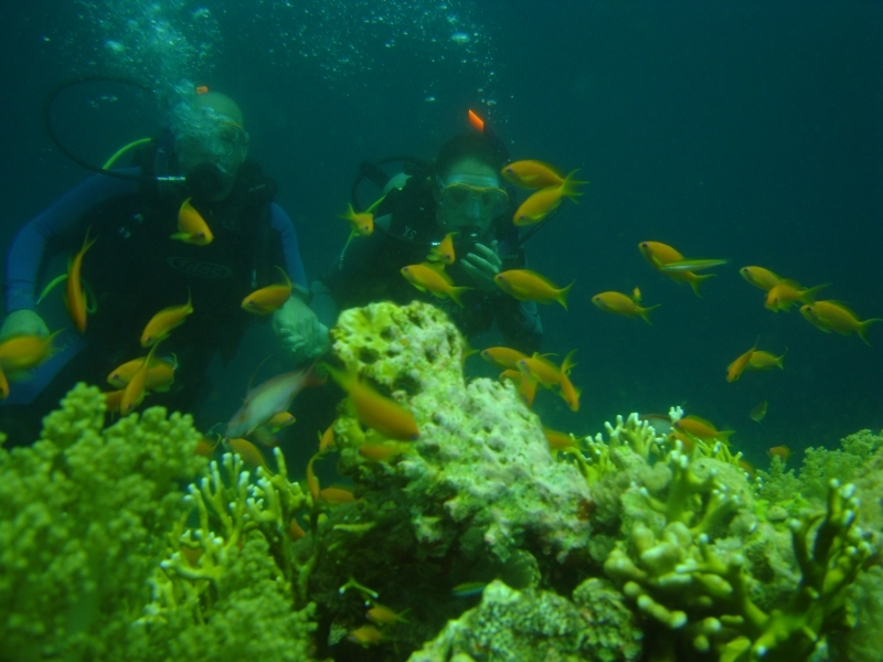 Diving at Ras Mohammed National Park