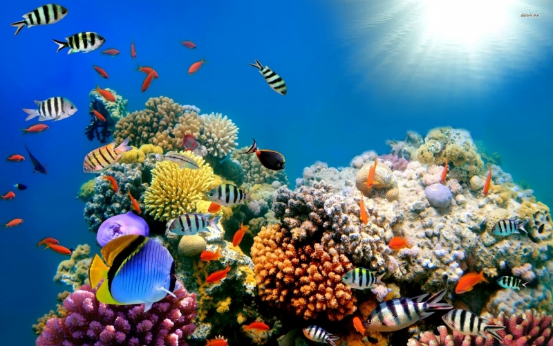 Hurghada Red Sea Marine Life