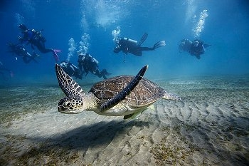 Red Sea Diving Holidays with Memphis Tours Egypt