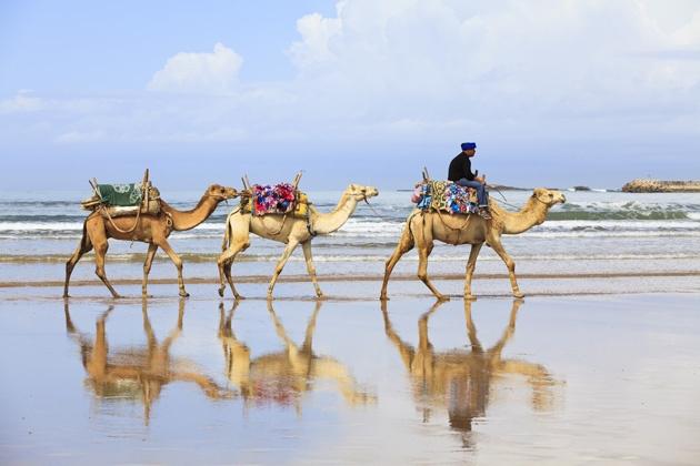 Paseo en un camello.