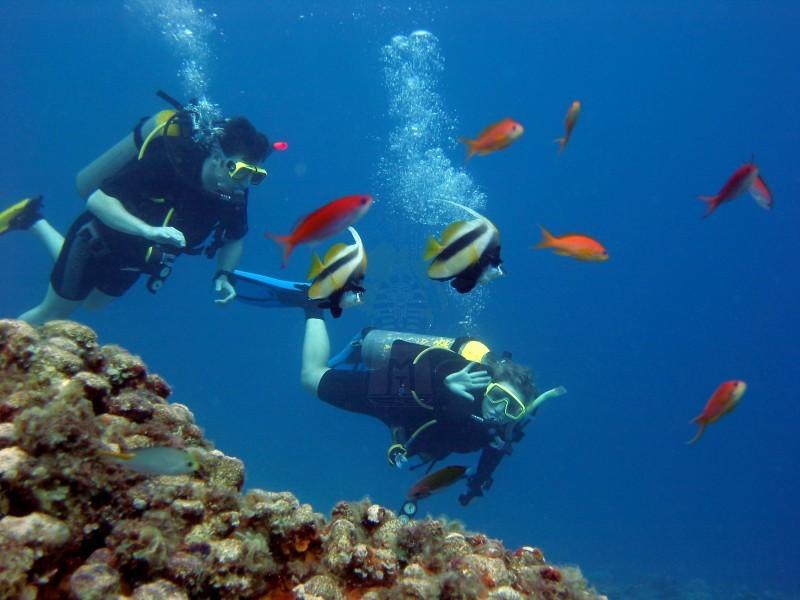 Snorkling no Mar Vermelho