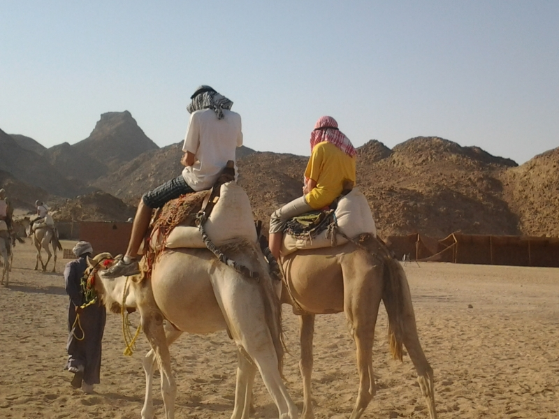 Camel ride at the Bedouin Village, Hurghada