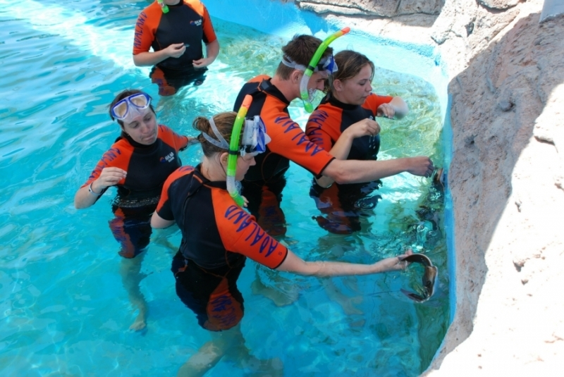 Snorkeling in Adaland Sea Park