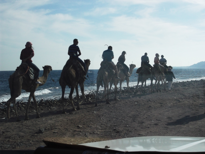 Camel Riding on Blue Hole beach, Dahab Red Sea