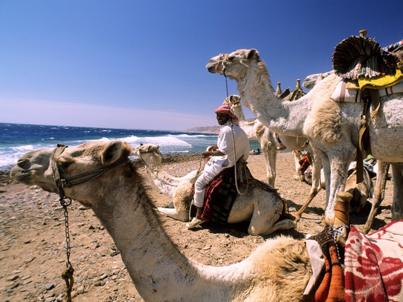 Camel Ride on Sharm Beaches