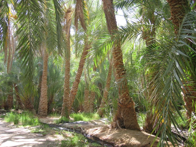 Oasi di Farafra, Deserto Occidentale