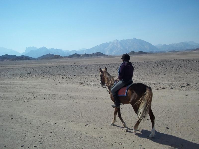 Horse riding in Sinai