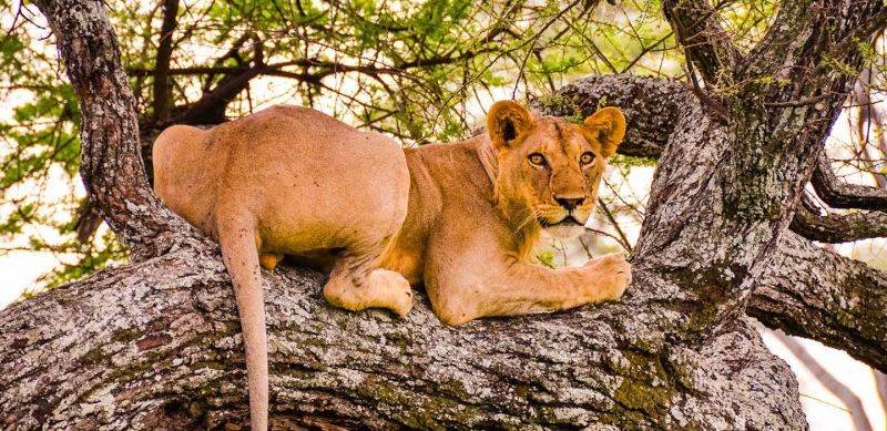 Tarangire National Park Guide