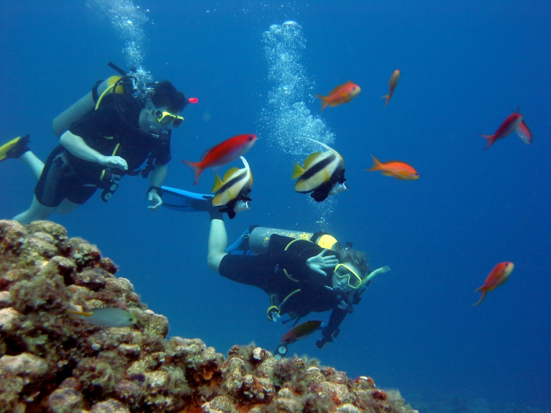 Diving in the Red Sea, Hurghada