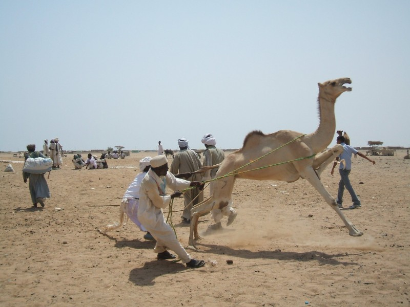 Mercato dei Cammelli, Il Cairo
