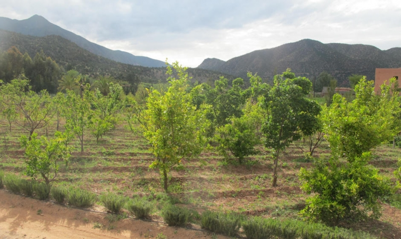 Nature in Asni Ouirgane Valley