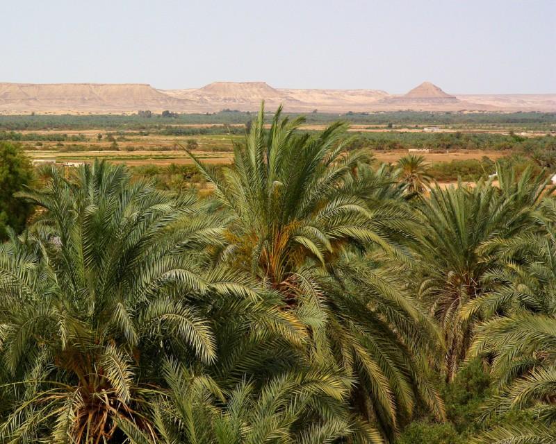 Bahariya Oasis, Western Desert