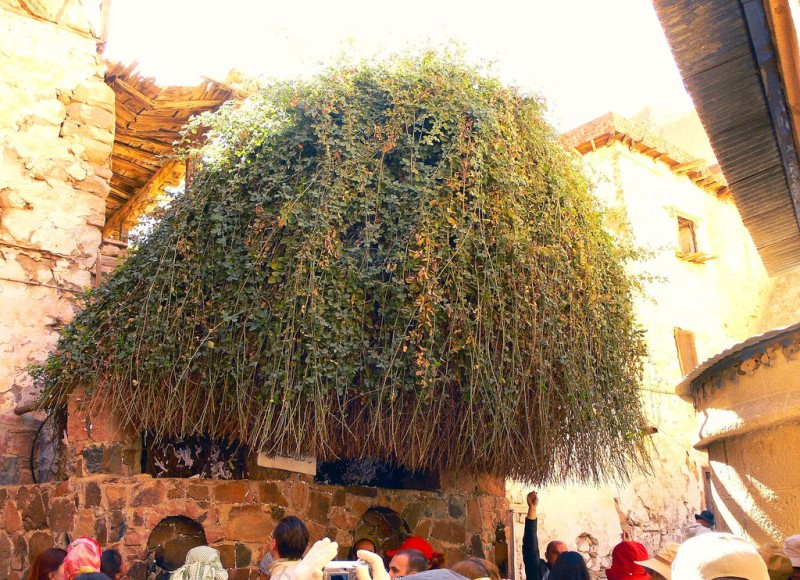 The Burning Bush at St. Catherine Monastery in Sinai