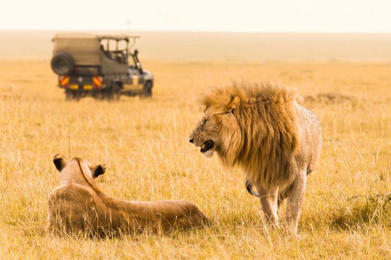 More About The Maasai Mara National Park