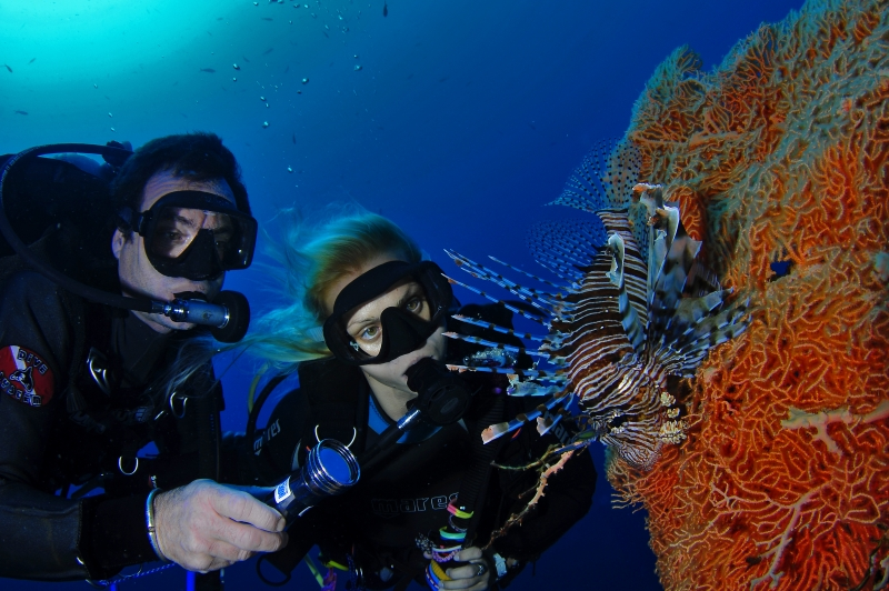 Joy of Introductory Diving in Red Sea