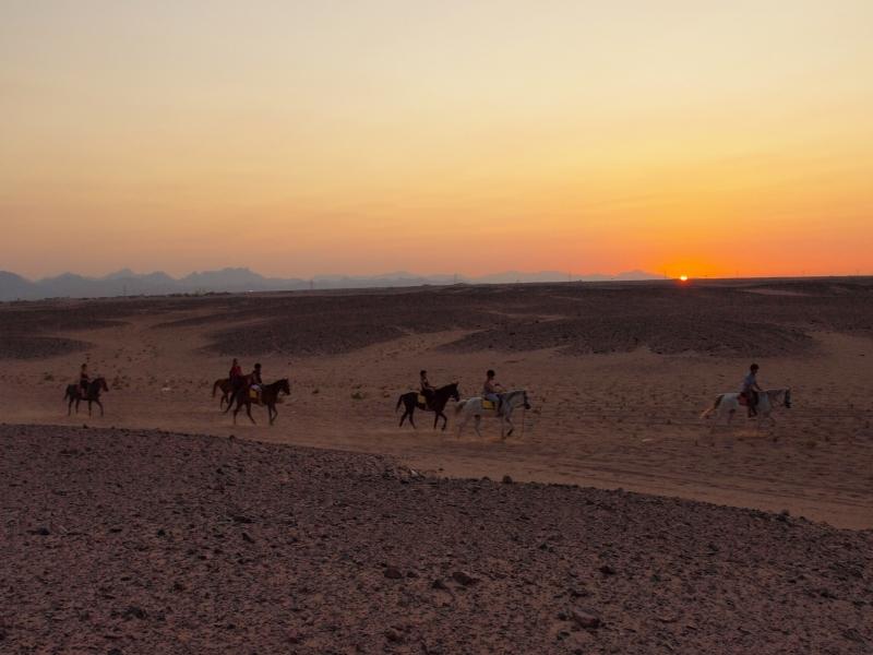 Horse ride in Sinai Desert