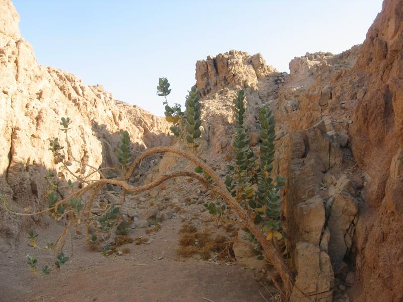 Bedouin area in Sinai Desert