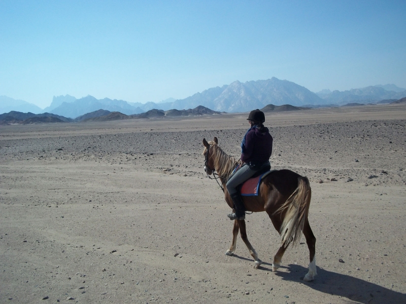 Horse Riding Adventure in Sinai Desert