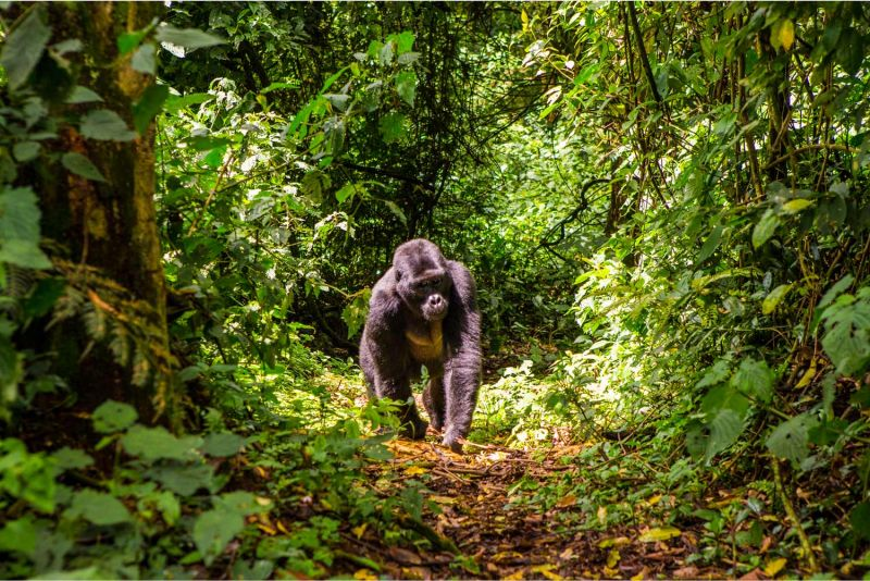 Discover Mukura Forest