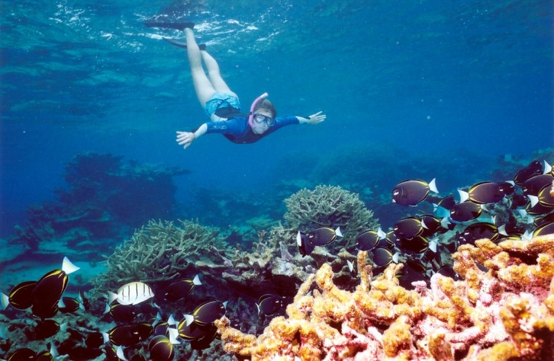 Snorkeling in Sharm