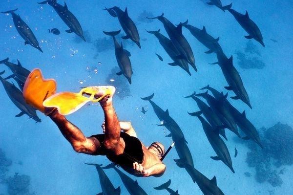 Sataya Dolphin Reef Ausflug