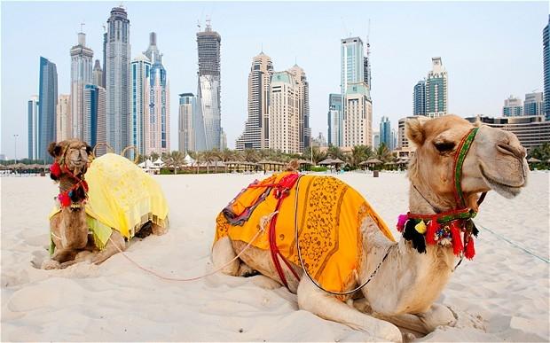 迪拜和埃及许多国多种成分的套餐