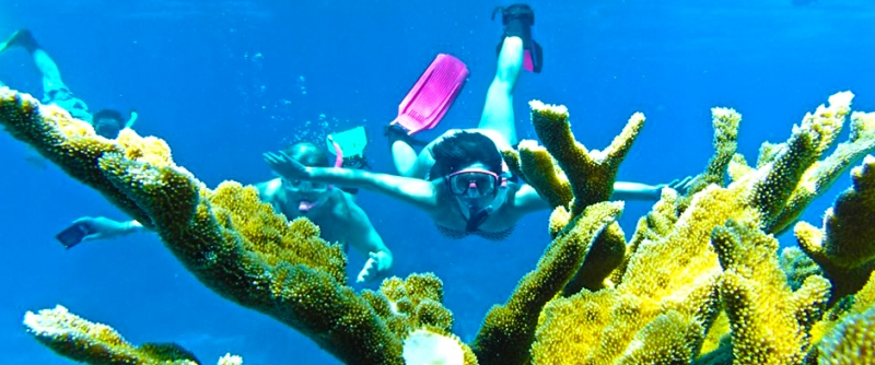 Insolita Esperienza di Snorkeling