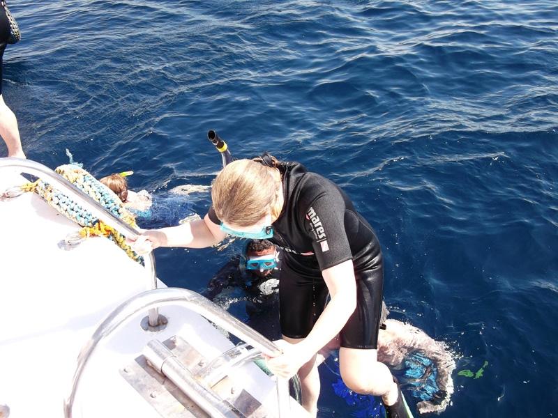 Start the Snorkeling Adventure