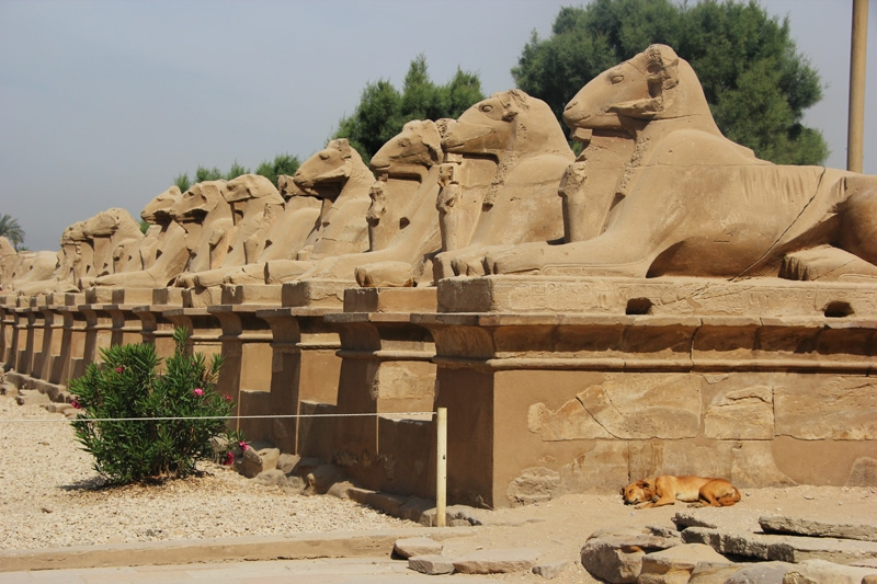 Sphinx Valley in Karnak Temple