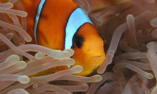 Los arrecifes de coral en Hurgada, El Mar Rojo