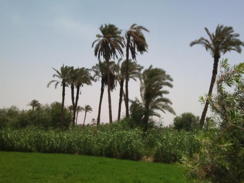 Farmlands in El Fayoum Oasis